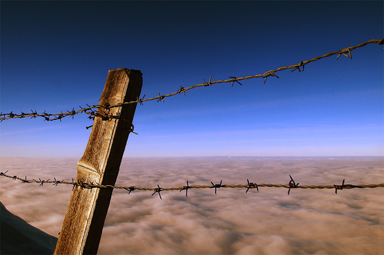 Barbed_fence