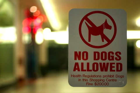 No_dogs_allowed_by_maebmij_on_flick